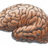 Brain Injury: What is it?