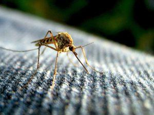 the zika virus